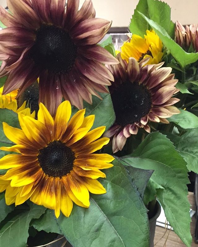 Our sunflowers are ready for your Labor Day parties !!